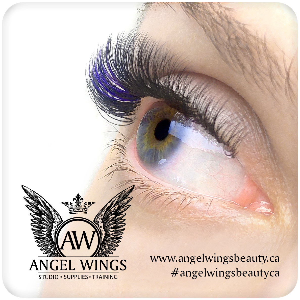 Angel Wings Eyelash Academy International Academy Luxury Lash